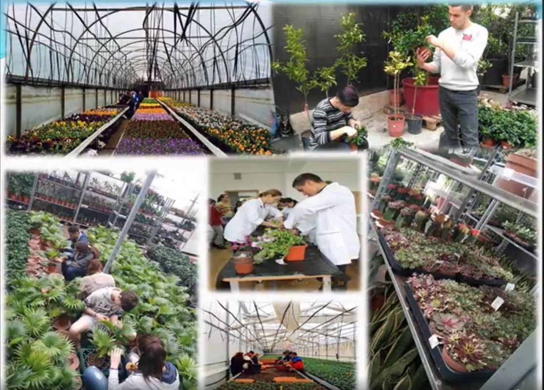 tehnician-horticultor