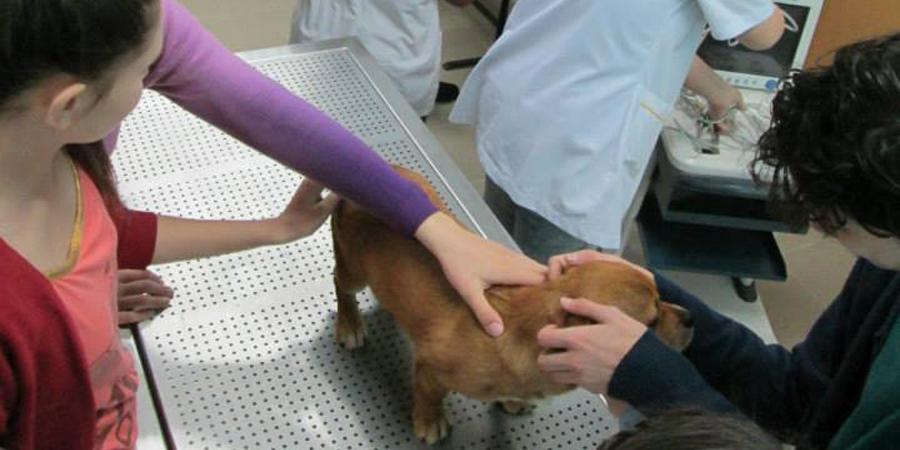 Clinică-veterinară